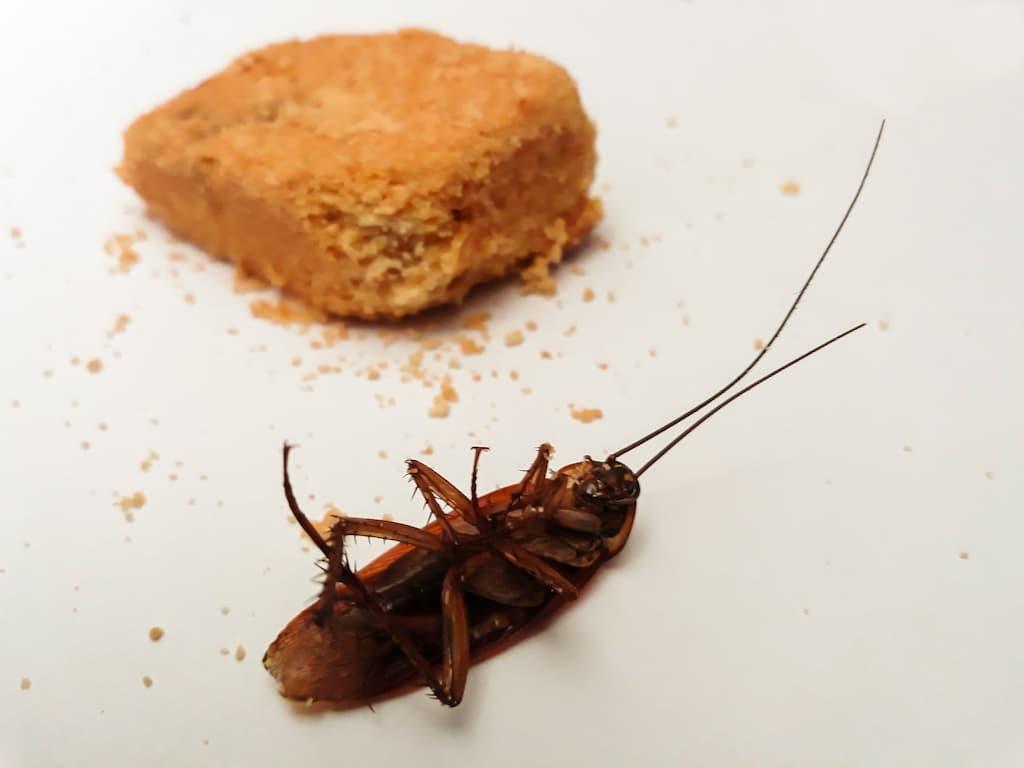 plaga-cucarachas-multiservicios-madrid